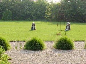 Rammekenshof honden -Mariëtte Verlaan