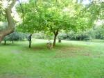 Labyrinth in orchard at Castle 'de Berckt'