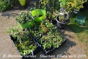 tuinverrassing-planten-MV