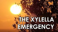 Xylella emergency, dossier xylella, create destiny,